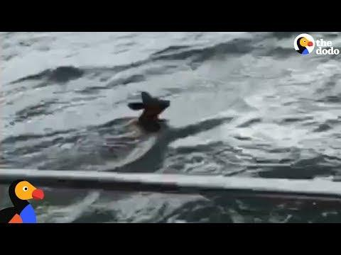 Boaters Head Out In Storm To Save A Drowning Fawn