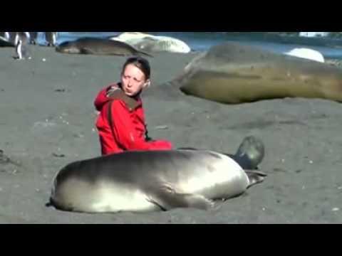 Wild Baby Penguin Befriends Man On Beach