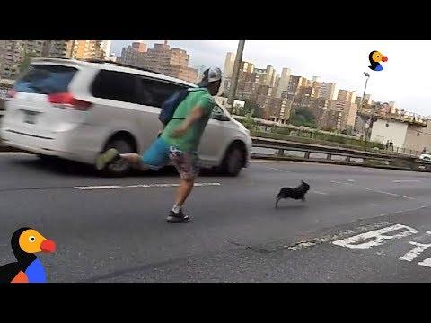 Man Goes On Insane Chase To Save A Stranger's Dog UPDATE | The Dodo