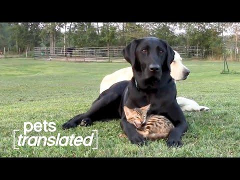 The Ultimate Pet BFFs | Pets Translated Video