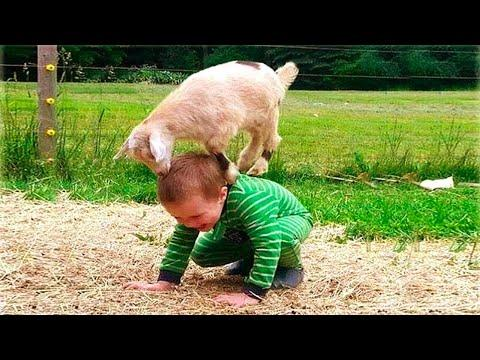 Babies and Kids Love playing with Animals   Cuteness!