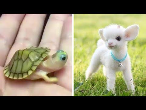 Cute baby animals Videos Compilation cutest moment of the animals - Soo Cute! #9