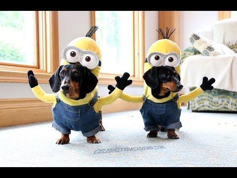 Wiener Dog Minions!!