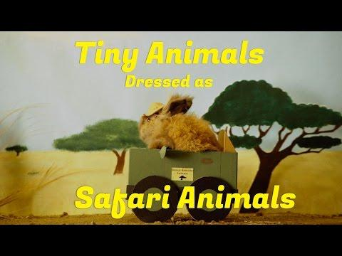 Tiny Animals Dressed As Safari Animals