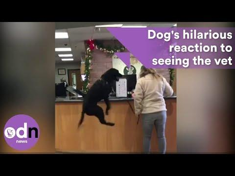 Hilarious dog's reaction to seeing the vet #Video
