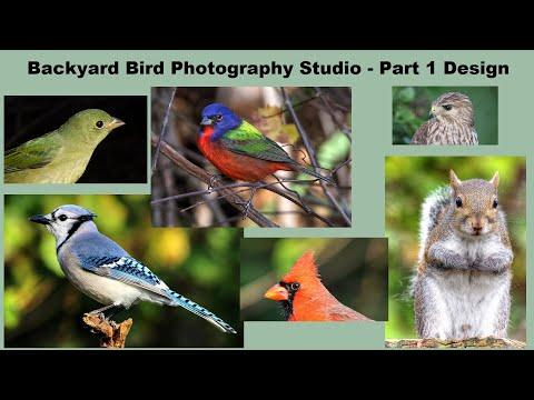 How To Make a Backyard Bird Photography Studio Part 1