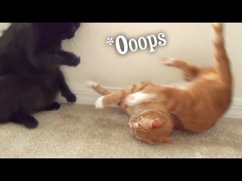 Funny Cat & Kitten Fails Compilation! #Video
