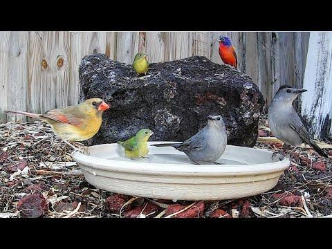 Backyard Birds Love Bird Baths