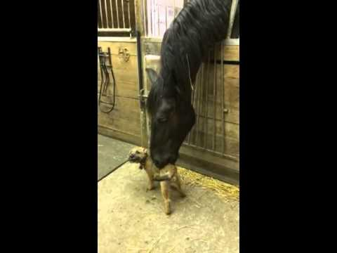 Friendly Horse Nibbles On Cute Little Dog