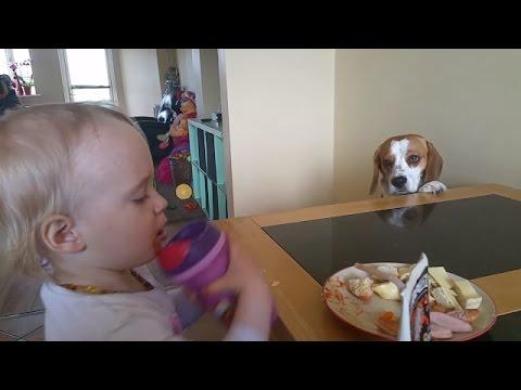 Dog Wants To Trade Stuff For A Human Breakfast