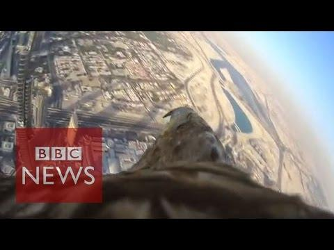 Eagle-cam: Incredible POV Shot As Bird Descends From World's Tallest Building