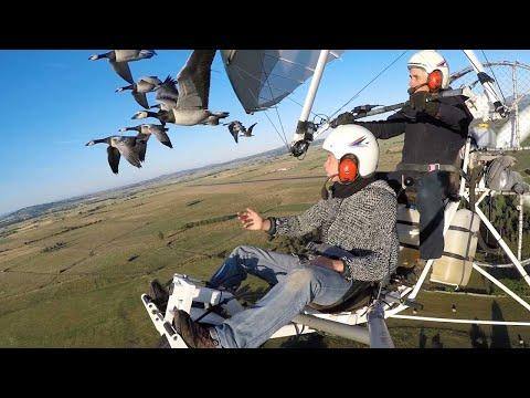 Pilot Takes To The Skies With Flocks Of Bird
