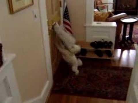 Calvin The Junk Mail Dog!