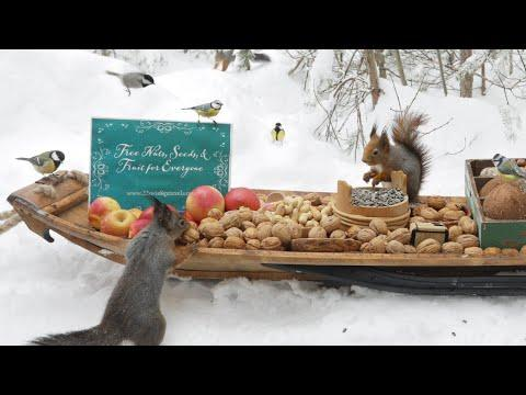 The Traveling Bird Feeder Video - Relax With Squirrels & Birds ( 1 Hour )