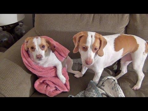 Cute Dog Maymo And Cute Sister Penny At Play