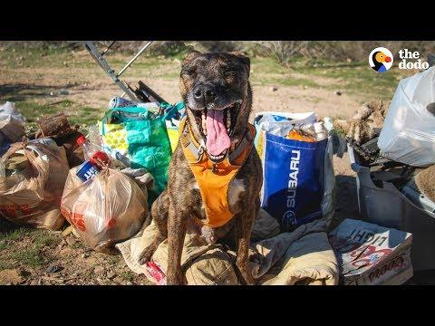 Dog Is Very Good At Recycling  | The Dodo