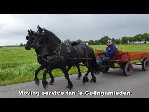Friesian Horses moving service fan e Goengamieden.