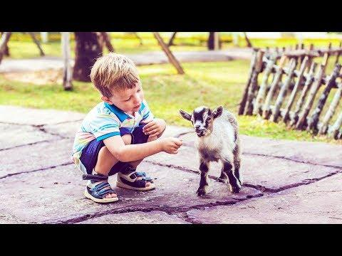 Babies vs Petting Zoo Animals - Funny Baby and Animal Videos (2018)