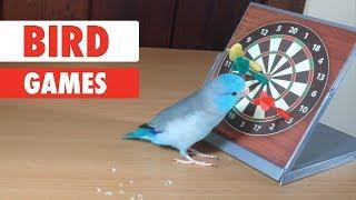 Bird Games | Smartest Birds Ever
