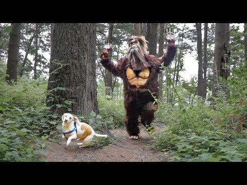 Dog vs Bigfoot Prank: Funny Dogs Maymo, Potpie & Penny