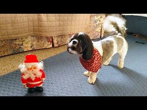 Funny Dogs who Don't Like Christmas