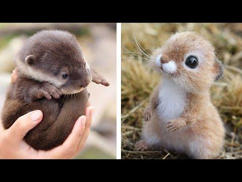 Cute baby animals Videos Compilation cutest moment of the animals - Soo Cute! #14