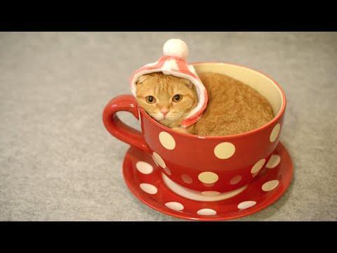 Christmas Kitty Will Lift Your Christmas Spirit!