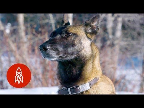 These Dogs Sniff Out Wildlife Crime