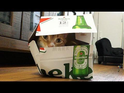 A Cat's Guide To Boxes