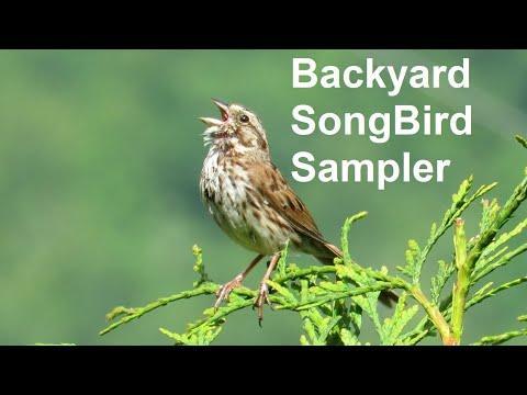 Backyard Songbird Sampler