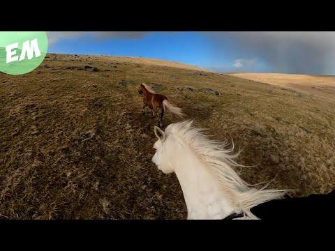 A Reinless Ride across Bodmin Moor Video