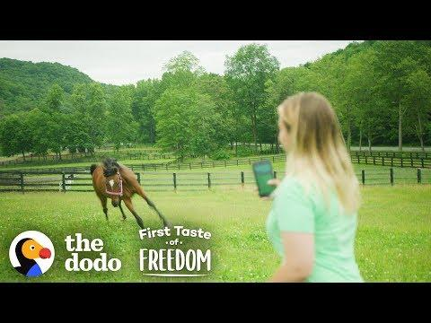 Starving Horse Becomes So Gorgeous And HAPPY  | The Dodo First Taste Of Freedom