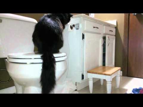 Cat Unrolls Toilet Paper