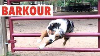 Barkour 2018 (Animals Doing Parkour)