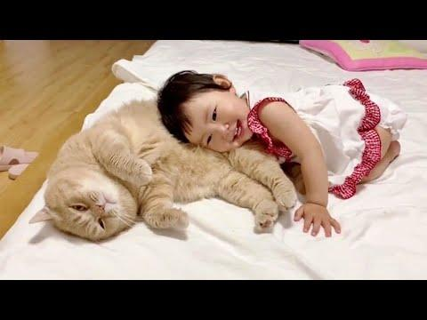 Loving Family Cat Always There For His Little Human Sister #Video