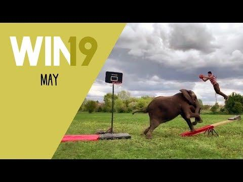 WIN Compilation May 2019 Edition | LwDn x WIHEL