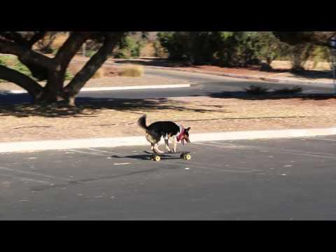 Jumpy The Dog - Skateboard Cruising