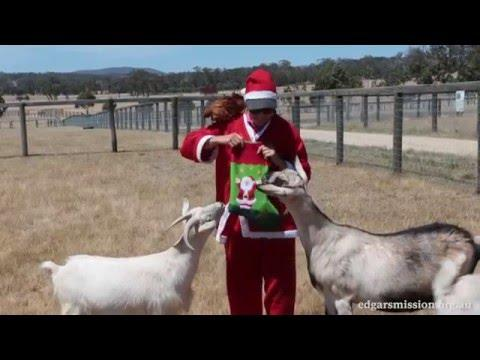 Merry Christmas From Edgar's Mission Farm Animal Sanctuary