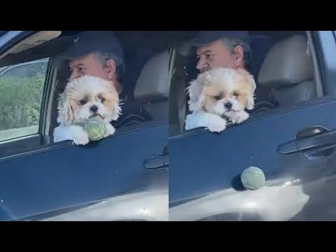 Dog Loses Ball While Driving. Your Daily Dose Of Internet.