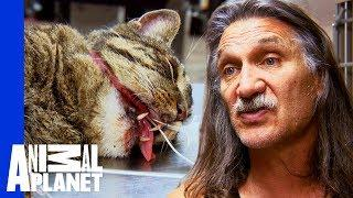 Chubbs The Cat Needs Surgery To Fix A Nasty Broken Jaw | Dr Jeff: Rocky Mountain Vet