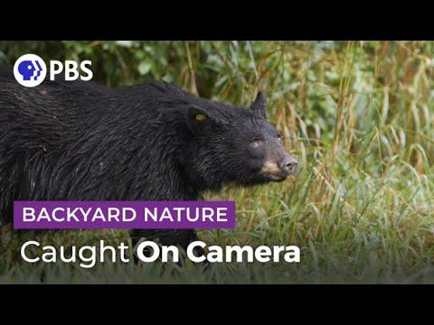 Caught On Camera | Backyard Nature Video