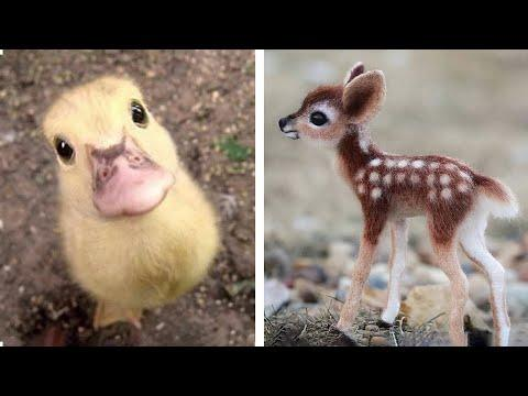 Animals SOO Cute Video! Cute baby animals Videos Compilation cutest moment of the animals #2