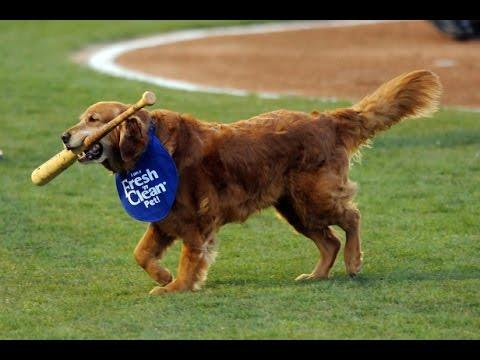 Bat Dogs - As American As Apple Pie!