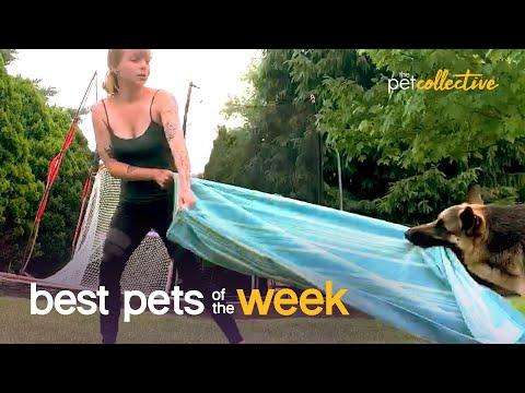 This Dog Hates Yoga Video | Best Pets of the Week