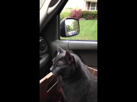 Scared cat says we're going? On way to vet video