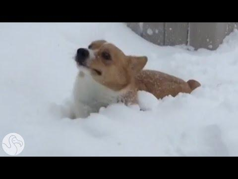 Pets Who Have NO Idea What To Do With All This Snow