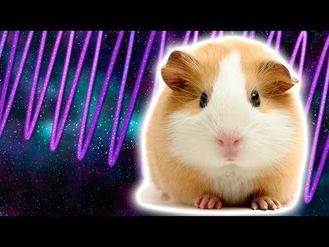 Talking Cosmic Guinea Pig