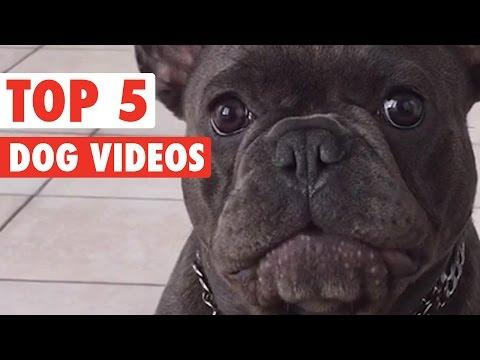 Best Of The Week Dogs Compilation