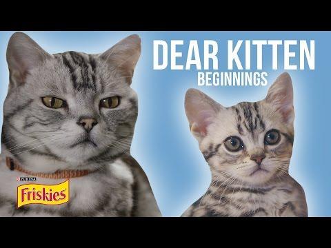 Dear Kitten: Beginnings