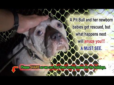 Lexus And Her Newborn Pups Get Rescued!